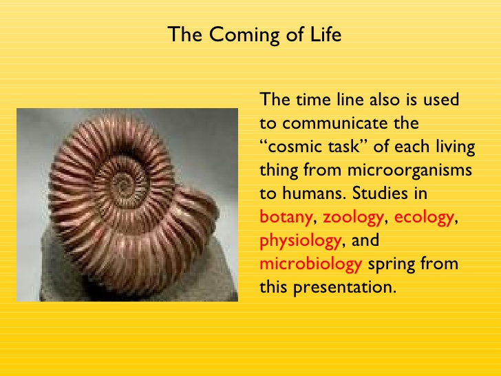 The Timeline of Life